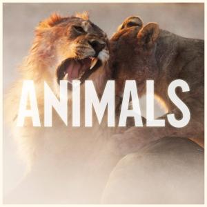 Maroon-5-Animals-2014-1200x1200-300x300